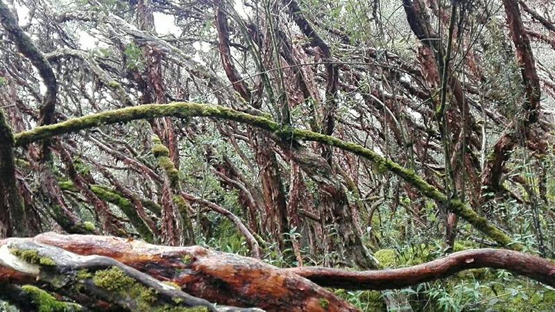 Forêt du parc Cajas.