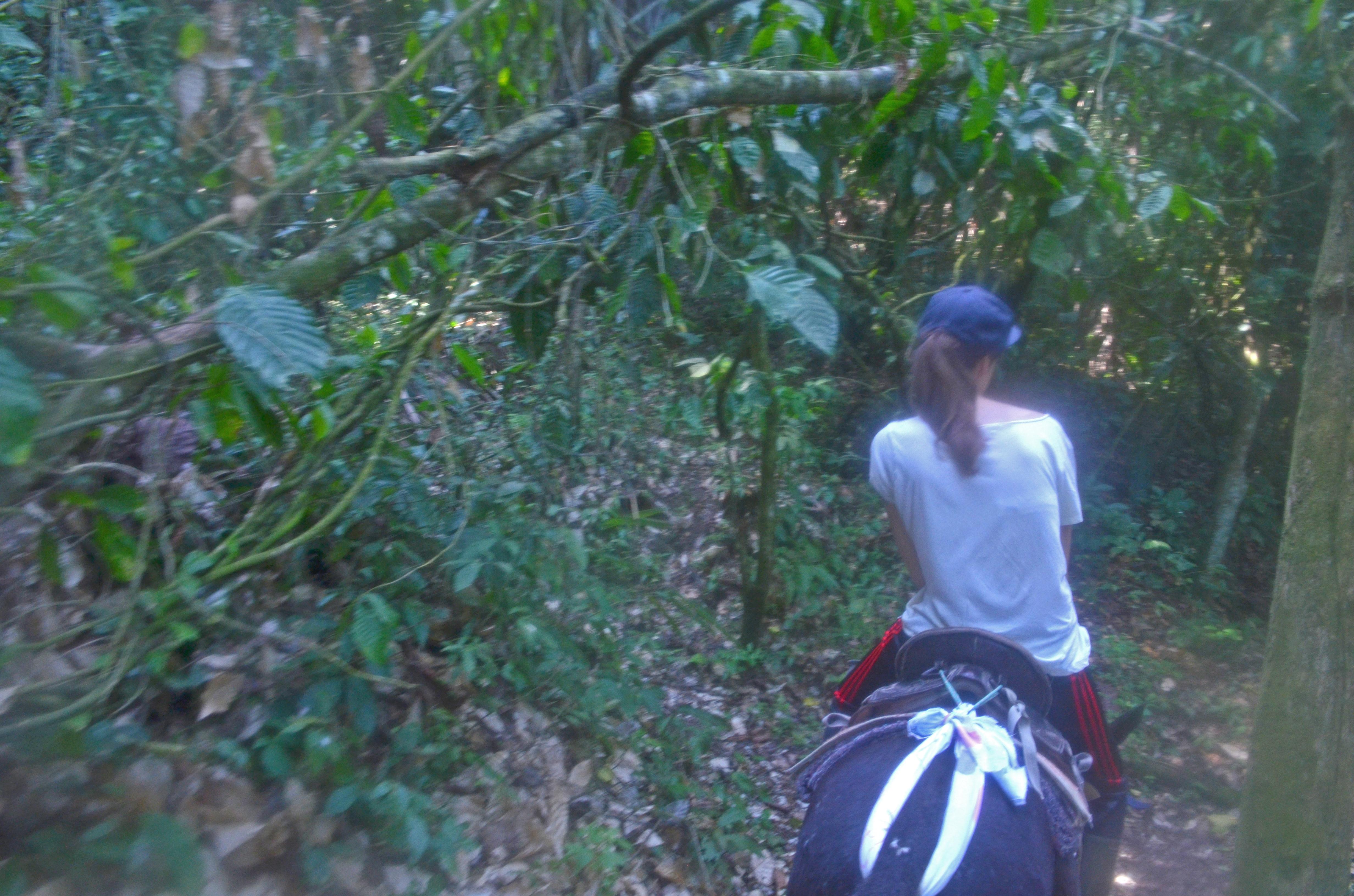 La randonnée à cheval au Bolo De Oro permet d'observer un grand nombre de rapaces.