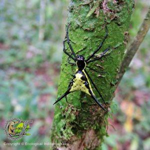 Photo d'un insecte de la forêt